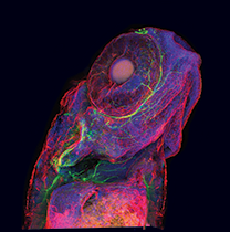 /media/491791/zebrafish-answerkey.png